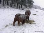 Mulle og Et i snestorm