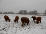 Vinter med de fire g èr og Brydsøs Holger i Høgild Mølle