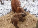 Mulle og Nature Kennan den 13-2-2014 en dum dag at føde!